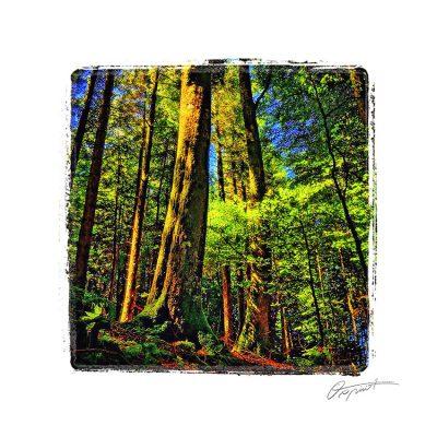 forêt du somail au Soulié