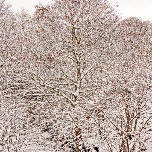 Paysage de neige entre Puyvalador et Axat