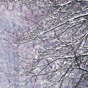 Photos d'arbres dans le massif du Dévoluy