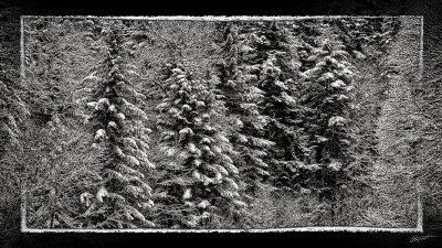 Forêt sous la neige dans le Capcir