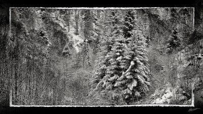 Forêt du Capcir pyrénées