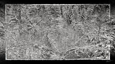 Forêt sous la neige dans les Pyrénées