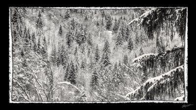 Forêt sous la neige en Haute Savoie