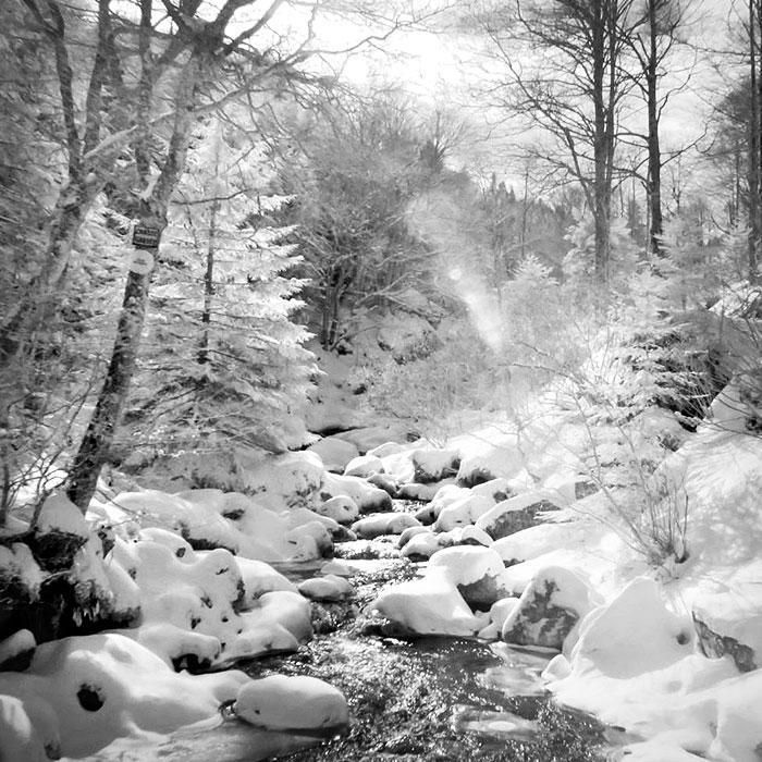 Forêts des Monts Dolmes
