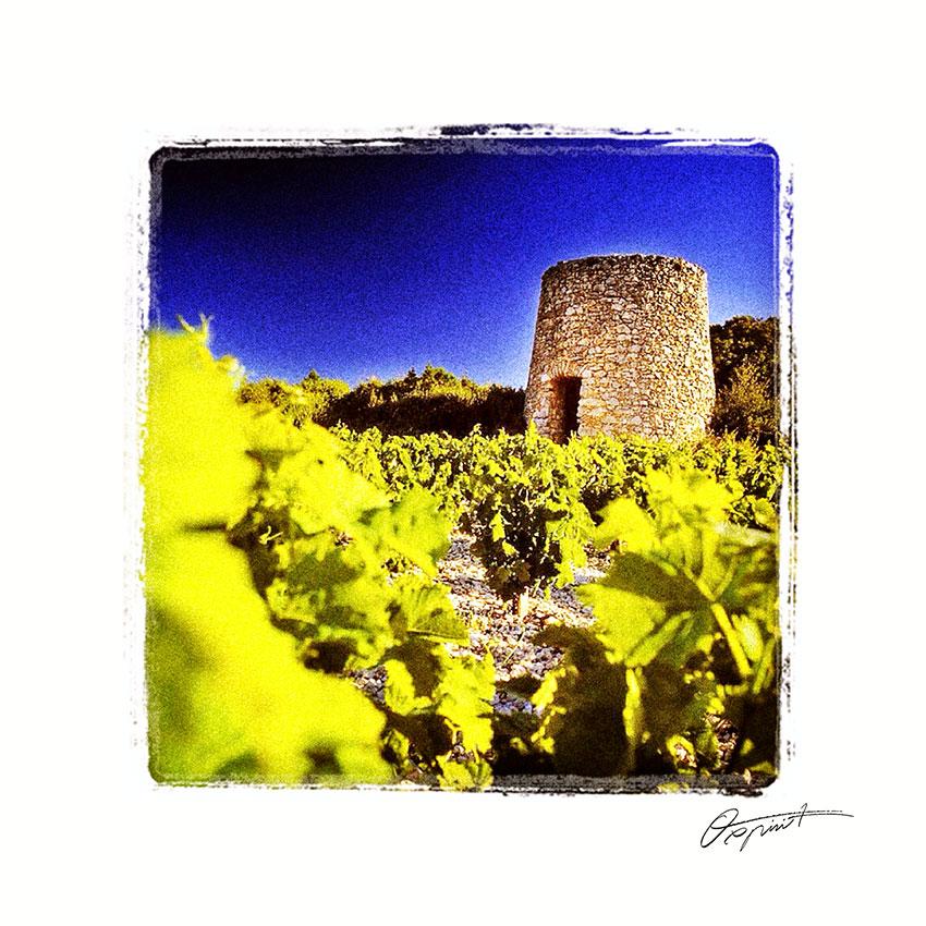 Vignes à Laurens en Faugères
