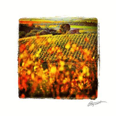 Vignes à Caussiniojouls en Faugères