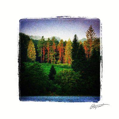 Forêt du Somail Occitane en France