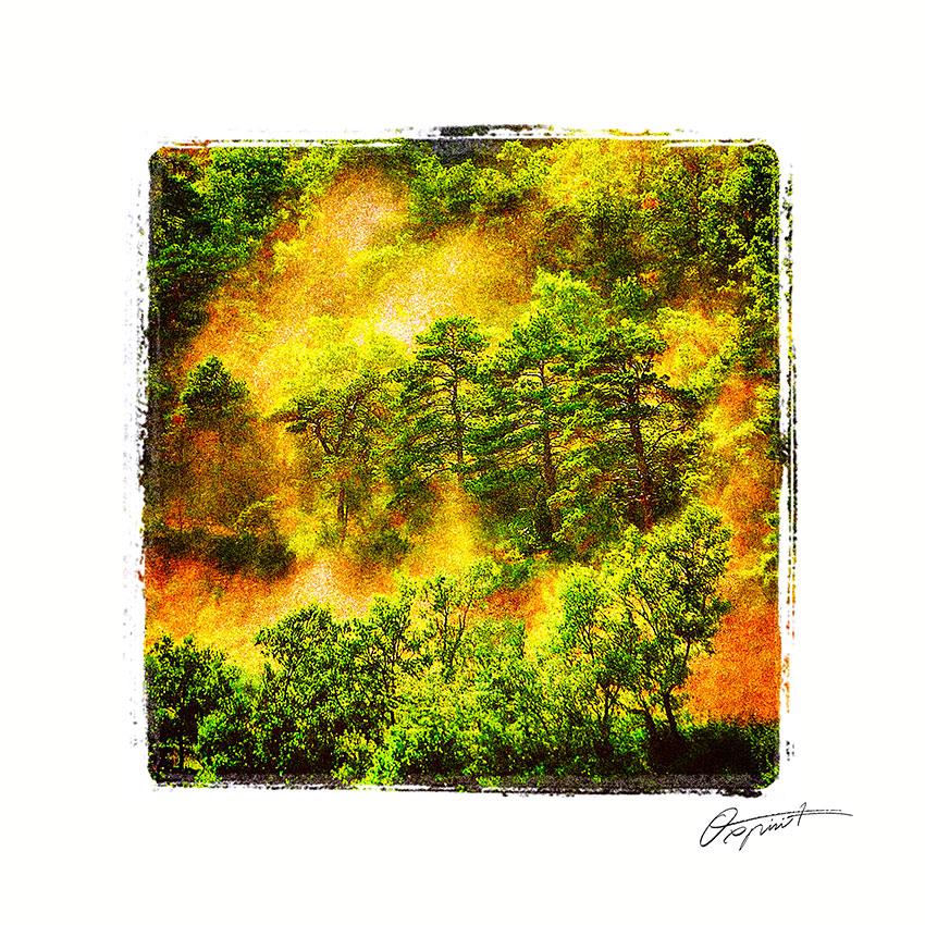 Forêt du Diois en France