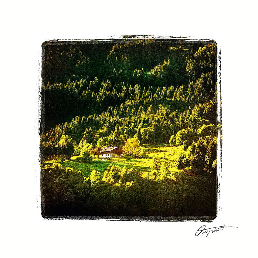 Forêt de Haute Savoie en France